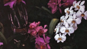 1958 orchids 1